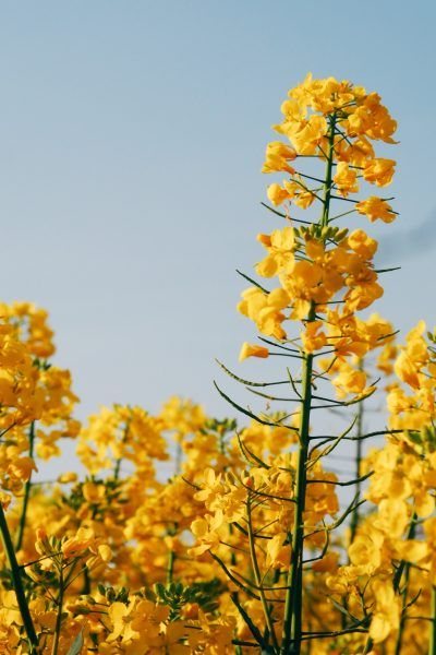 A month of sunshine & showers (April a Boden edit)